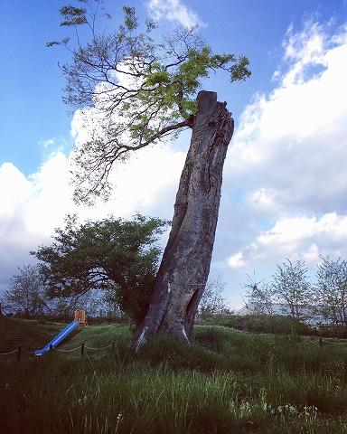 公園の真ん中に神秘的な巨木が!長野市篠ノ井の「瀬原田いのみ公園」に行ってきた