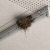 家の軒先にツバメが巣を作り雛が巣立つまでを記録してYouTube動画にしてみた